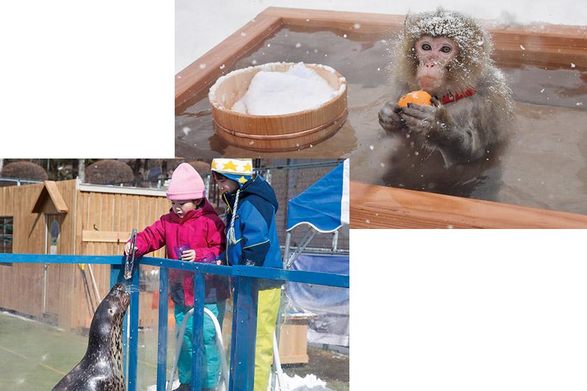 ニホンザルの露天風呂体験も! 大人気の「ふれあい動物広場」